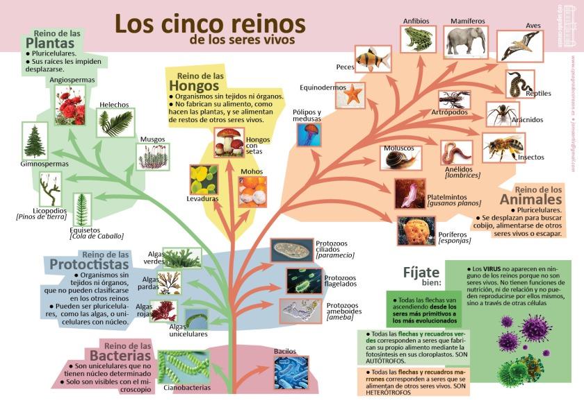 infografia-5-reinos-de-los-seres-vivos1
